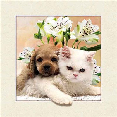 Kitten and Puppy 5D Illusion Framed Art 40cm x 40cm