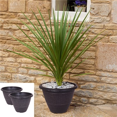 Pair of 70cm Cordylines plus 2 x 12inch Wicker Planters