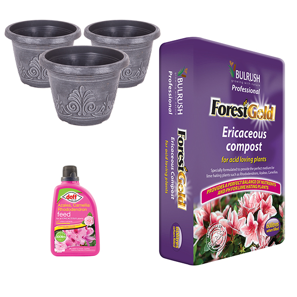 Image of Blueberry Growing Kit - Ericaceous Compost, Feed & Decorative Pots