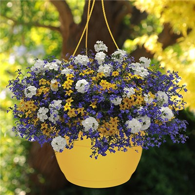 Pair of Pre-Planted 27cm (11in) Riverside Mix Hanging Baskets