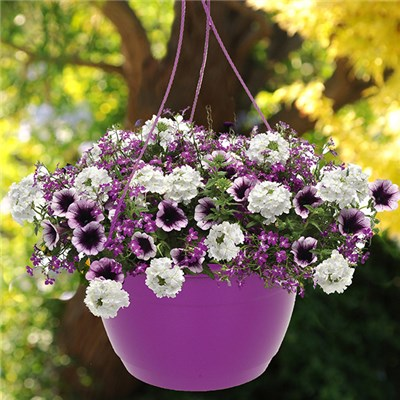 Pair of Pre-Planted 'Treasure Chest' Mix Hanging Baskets