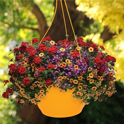 Pair of Pre-Planted 'Ayers Rock' Mix Hanging Baskets