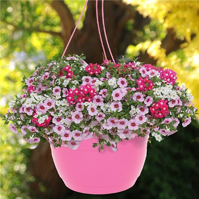 Pair of Pre-Planted Lip Gloss Mix' Hanging Baskets 27cm (11in)'