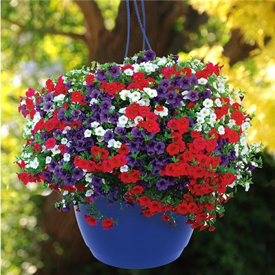 Pair of Pre-Planted Patriot Mix Hanging Baskets