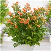 Double Up - Set of 4 Patio Campsis - 2 orange, 1 red & 1 yellow