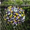 Pansy Cool Wave pre-planted yellow 11 inch hanging basket