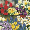 Balcony Planter Spring Flowered Bulbs Plant O Mat Kit and 60cm Windowbox