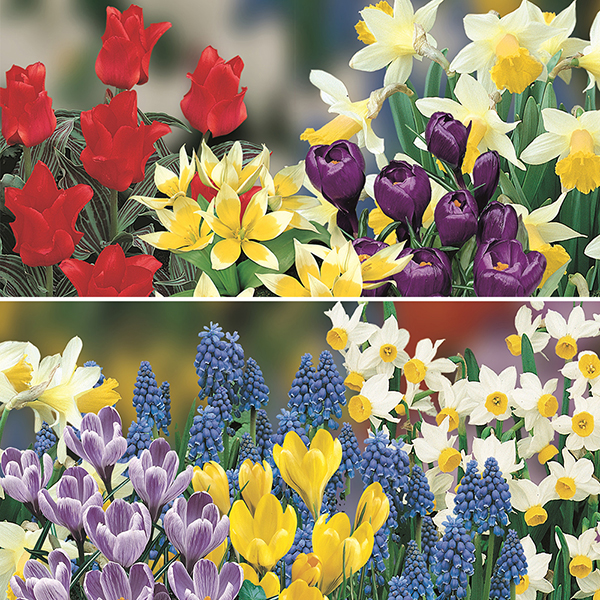 Balcony Planter Spring Flowered Bulbs Kit No Colour