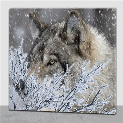 Wolf Frost LED Picture 40x40cm