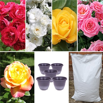 5 x Garden Glamour Rose Bushes, 5 Metallic Planters and 40L Compost