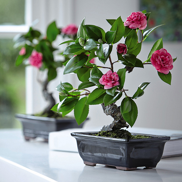 Camellia Bonsai with BONUS Silk Flower Cleaning Spray 1603633 No Colour