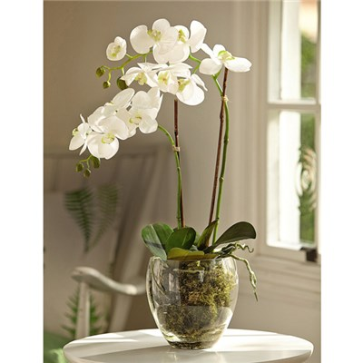 White Double Phalaenopsis with BONUS Silk Flower Cleaning Spray 1603633