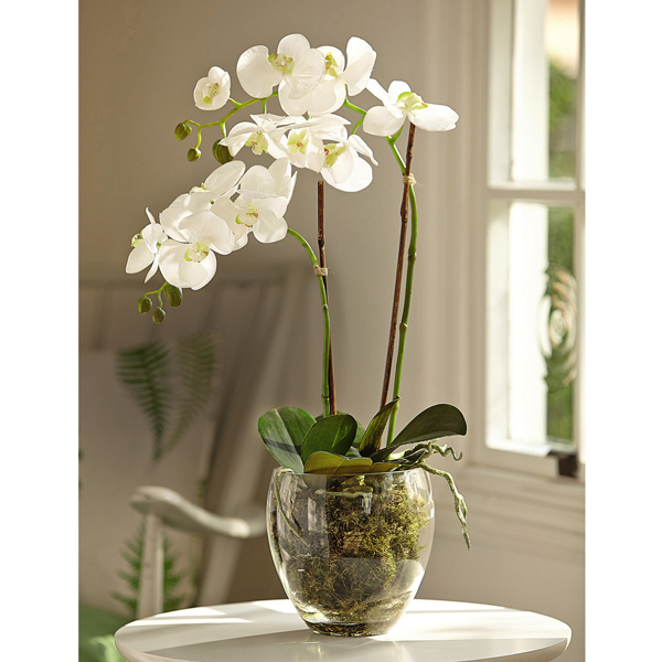 White Double Phalaenopsis with BONUS Silk Flower Cleaning Spray 1603633 No Colour