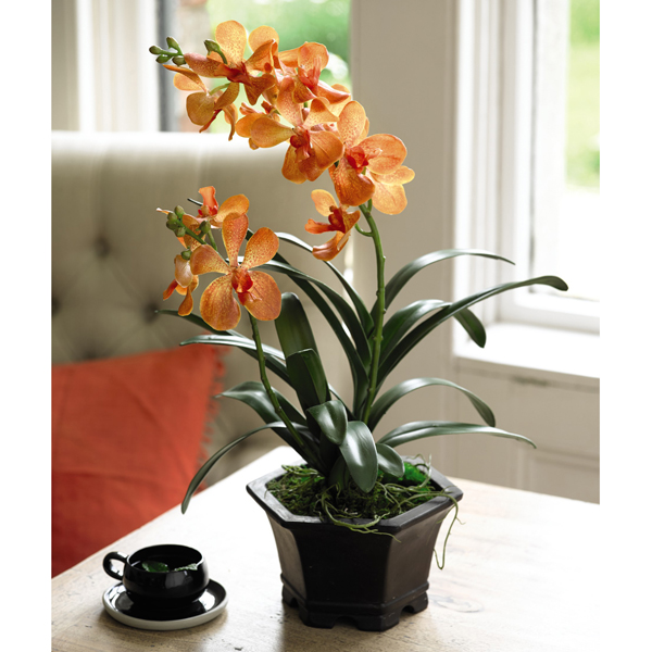 Orange Potted Vanda Orchid with BONUS Silk Flower Cleaning Spray 1603633 No Colour