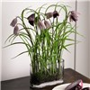 Oxford Fritillaries with BONUS Silk Flower Cleaning Spray 1603633