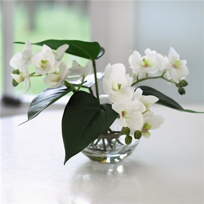 Orchid Bowl with BONUS Silk Flower Cleaning Spray 1603633