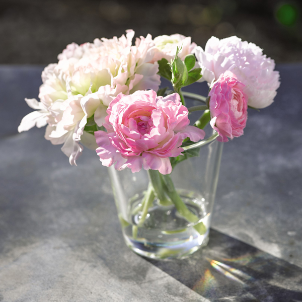 Pink Ranunculus Arrangement with BONUS Silk Flower Cleaning Spray 1603633 No Colour