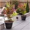 Acer Festival 3-in-1 Plus Premium Gold Hammered Effect Planter