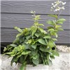 Patio Berry Garden Collection 9cm Pots (3 Pack) No Colour