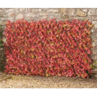 Red Acer Folding Hedge Trellis 1 x 2m