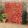 Red Acer Folding Hedge Trellis 1 x 2M - Model G1043