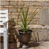 Pair Vertical Stripe Urns and 90cm Cordylines