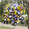 Trailing Pansy Cool Wave New Mix x 18 Plug Plants