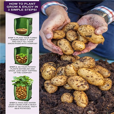 Patio Potato Kit