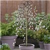 Pair of Salix Kilmarnock 70cm standard (Weeping Willow)