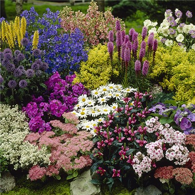 Lucky Dip Perennial 12 Plant Collection