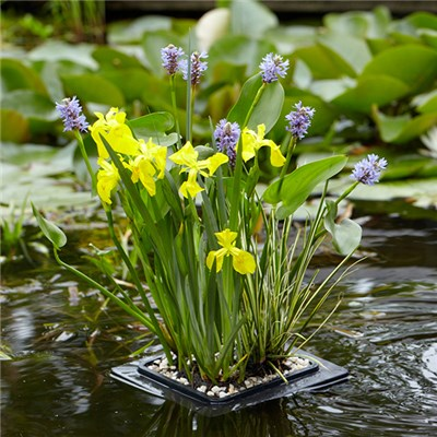 Pond Floating Raft kit