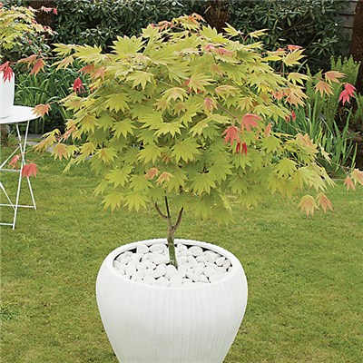 Acer Moonrise 3L Pot