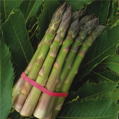 Asparagus Pacific crowns - pack x 10