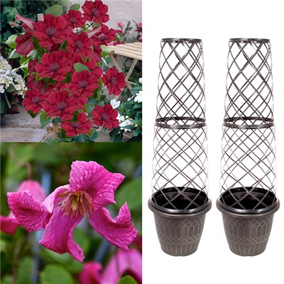 Pair Tower Pots and Clematis Boulevard - 9cm