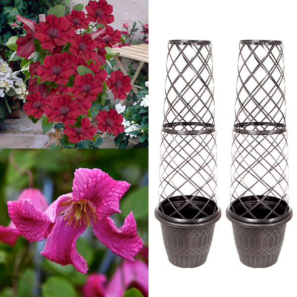 Pair Tower Pots and Clematis Boulevard - 9cm No Colour