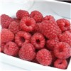 Set of 3 Raspberry Sweet Sunshine 9cm