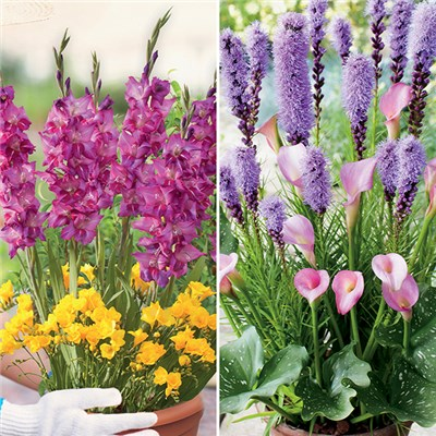 Set of 2 Plant-O-Mat Spring Bulbs Planting Kits x19 Bulbs in Each