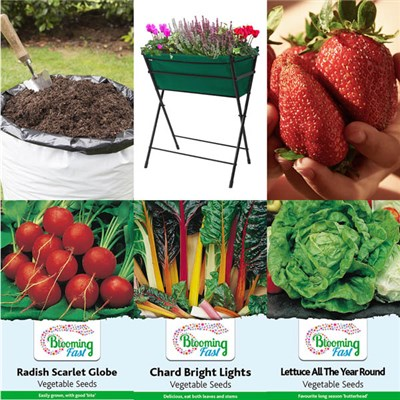Complete Summer Fruit & Vegetable Planting Kit & 40L Compost