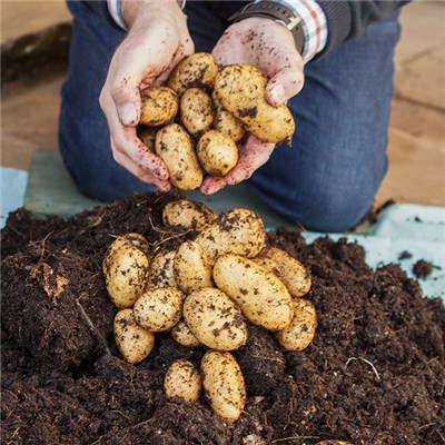 Complete Patio Potato Growing Kit Including 3 Varieties x6 Tubers, 3 Growing Pots 23L & 1kg Fertiliser
